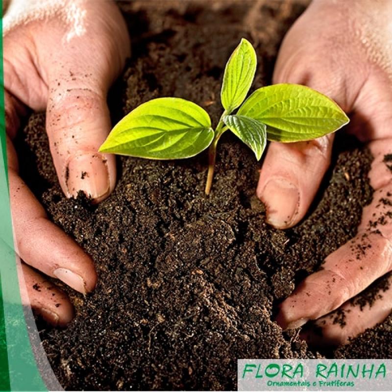 Adubo para Grama Água Funda - Fertilizante para Jardinagem