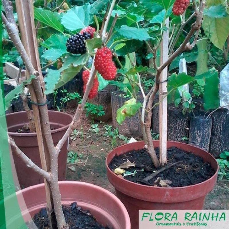 Comprar Mudas de Amora Ibirapuera - Mudas de Acerola