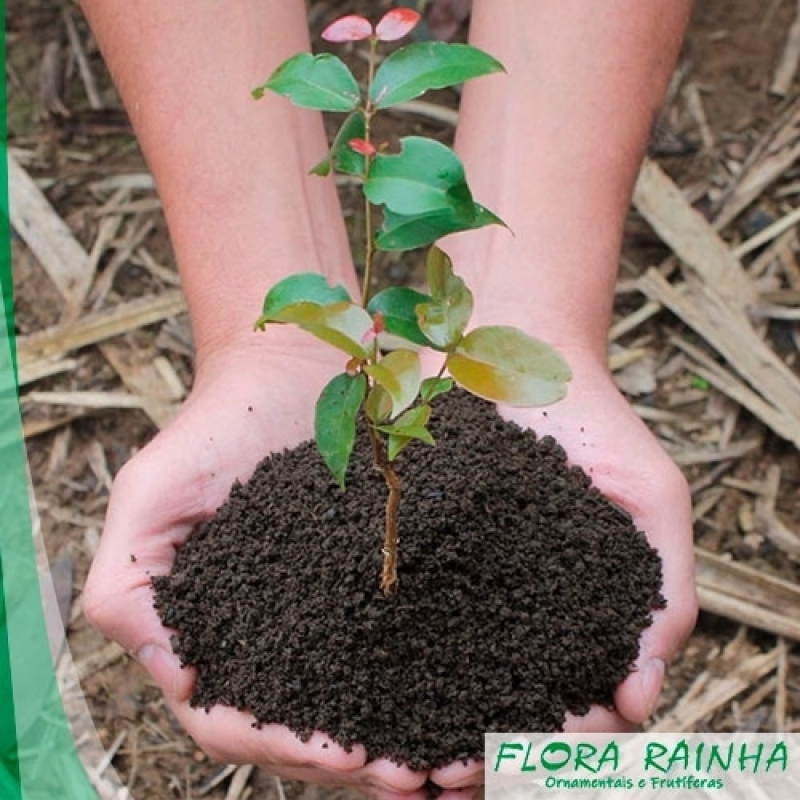 Fertilizante Natural Caieiras - Fertilizante Agrícola