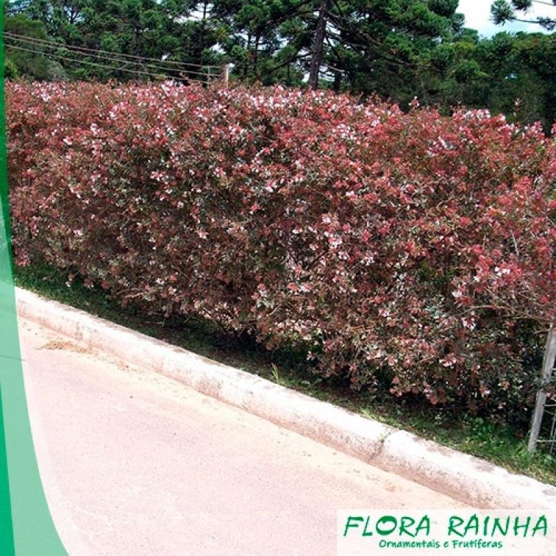 Fertilizante para Jardim Brasilândia - Fertilizante para Jardinagem