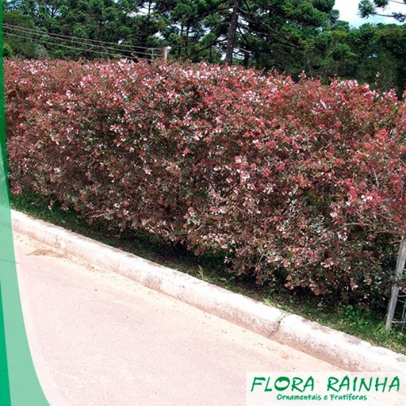 Fertilizante para Jardim Lauzane Paulista - Adubo para Ipê