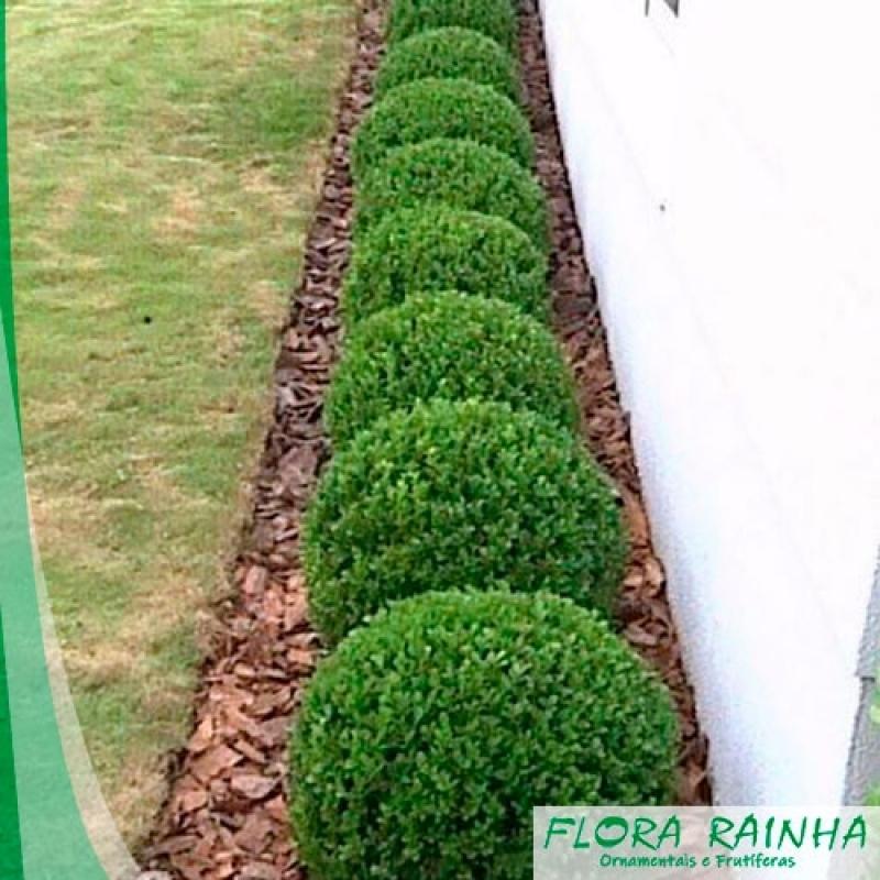 Fertilizante para Jardinagem Santos - Adubo para Orquídeas