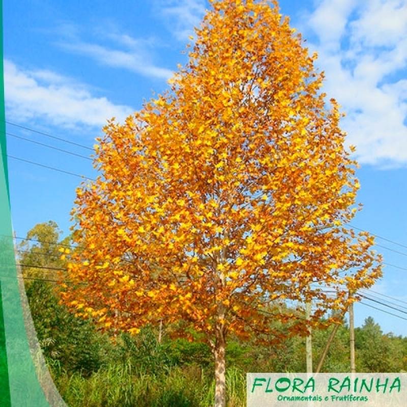 Fertilizante para Plantas Vila Andrade - Adubo para árvores