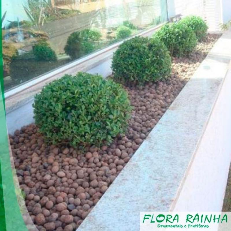 Onde Comprar Argila Expandida para Jardim Vargem Grande Paulista - Seixos para Jardim