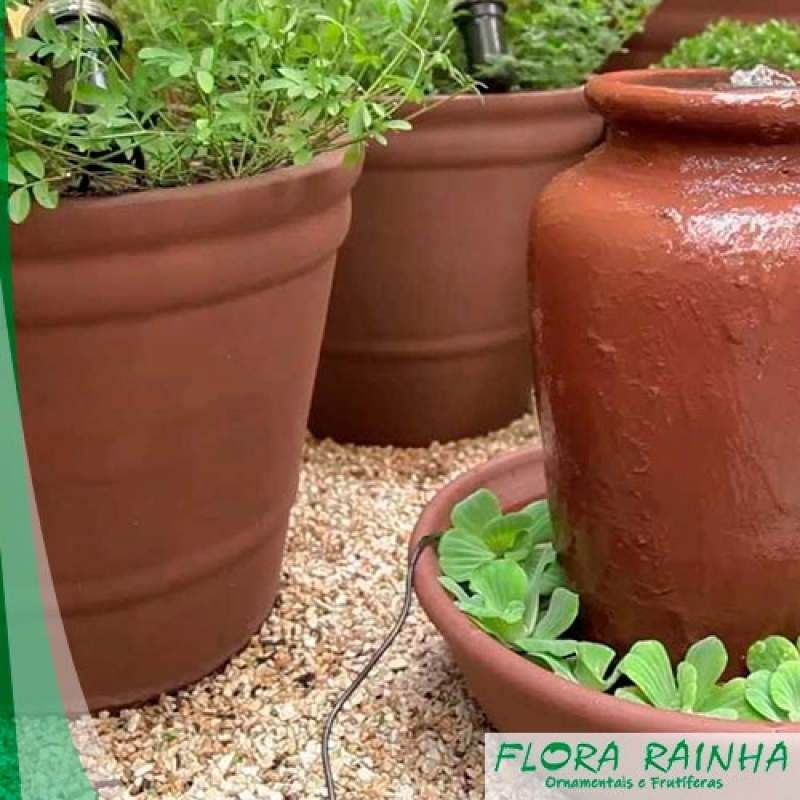 Onde Comprar Vaso de Barro para Jardim Nova Piraju - Seixos para Jardim