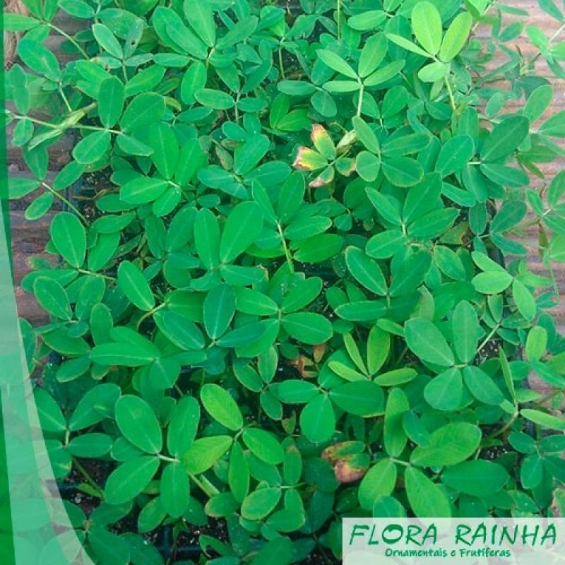 Onde Vende Adubo para Grama Vila Guilherme - Fertilizante para Jardinagem