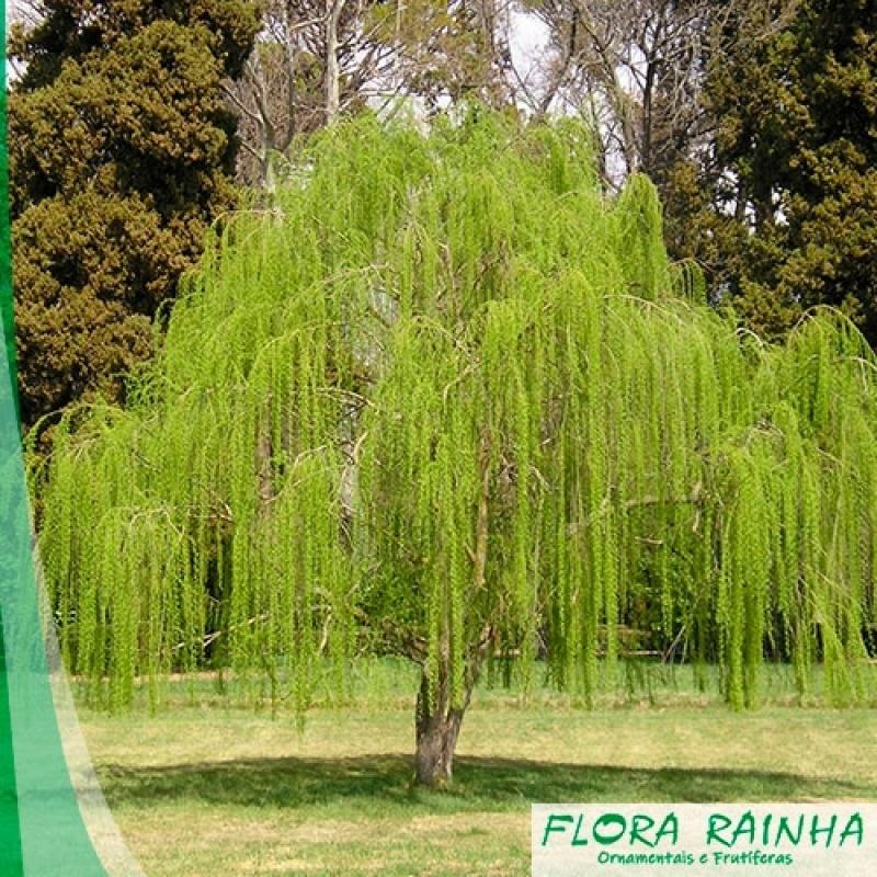Onde Vende Fertilizante para árvore Amparo - Adubo para árvores