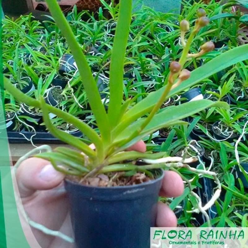 Onde Vende Fertilizante para Orquídeas Vila Matilde - Adubo para Ipê