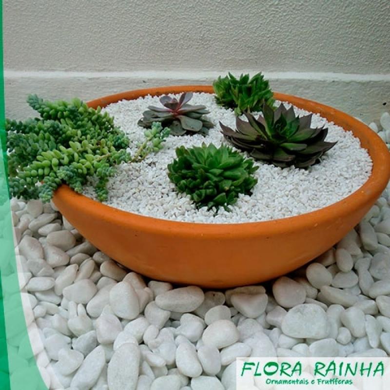 Onde Vende Pedra Branca para Jardim Vila Mariana - Vaso de Polietileno para Jardim
