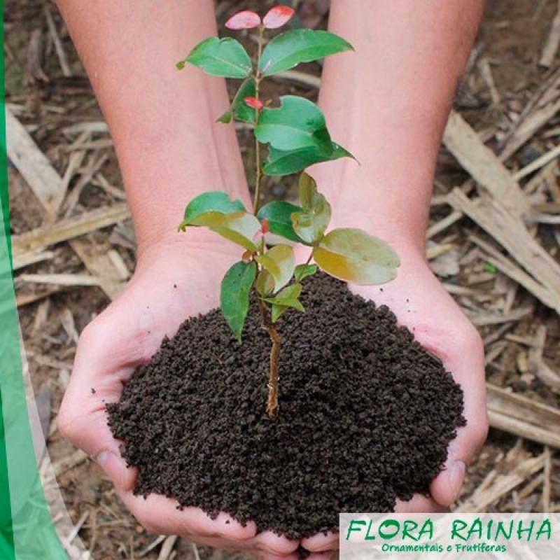 Qual o Melhor Adubo para árvores Amparo - Adubo para árvores Frutíferas