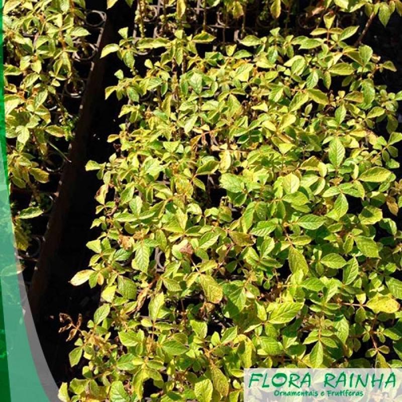 Qual o Melhor Fertilizante para Plantas Franco da Rocha - Adubo para Grama