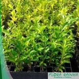 fertilizante para árvore