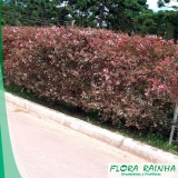 fertilizante para jardim Embu das Artes