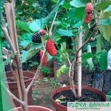 muda frutífera em vaso Jardim Orly