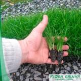 muda de grama