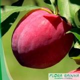 muda frutífera de ameixa