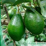 onde comprar muda árvore frutífera Vila Mariana
