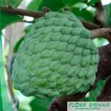 onde comprar muda frutífera Araçoiaba da Serra