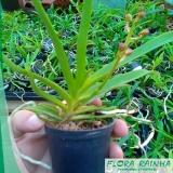 onde vende fertilizante para orquídeas Marília