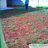 onde vende muda de grama São José do Rio Preto