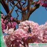 onde vende muda de ipê rosa Rio Grande da Serra