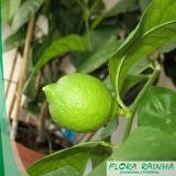onde vende muda de limão galego Instituto da Previdência