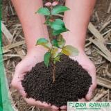 qual o melhor adubo para árvores Butantã