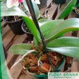 qual o melhor adubo para orquídeas Campo Limpo