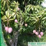 qual o melhor fertilizante para árvores frutíferas Parque Colonial
