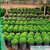 qual o melhor fertilizante para jardinagem Roosevelt (CBTU)