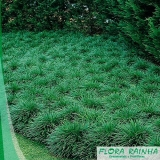qual o valor da muda de grama Parque Ibirapuera