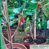 quanto custa a muda árvore frutífera Pedreira