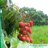 quanto custa a muda frutífera de lichia Iguape