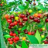 quanto custa a muda frutífera Vila Medeiros