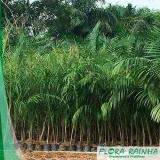 quanto custa muda de palmeira imperial São Roque