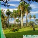 quanto custa muda de palmeira jerivá Santa Cecília