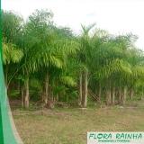 quanto custa muda de palmeira pupunha Vila Formosa