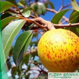 Mudas de Frutas Exóticas